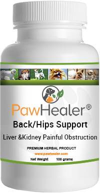 Back/Hips Support for Liver & Kidney Painful Obstruction