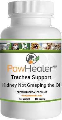 Trachea Support: Kidney Not Grasping Qi